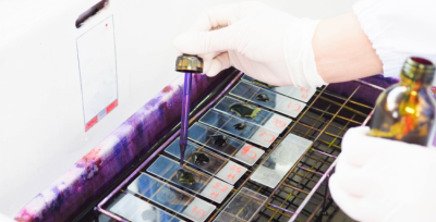 Xác định loại vi khuẩn bằng phương pháp nhuộm Gram
